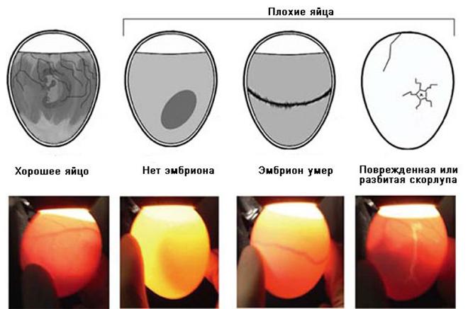Плохие и хорошие яйца