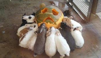 Стоит ли давать кроликам тыкву
