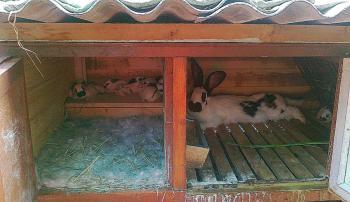 Маточник для кролика