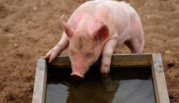Поилка для свиней
