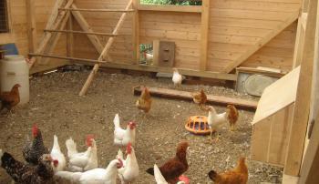 Напольное покрытие в помещение для кур: что лучше выбрать