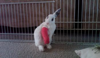 Падеж кроликов