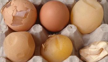 Истончение скорлупы куриных яиц: пути решения проблемы