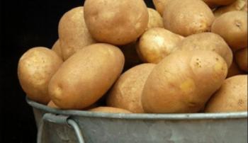 Плоды картофеля Тулеевский