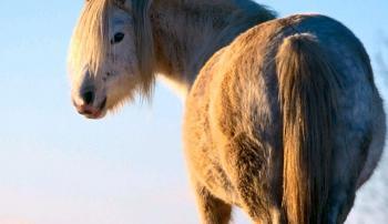Круп лошади