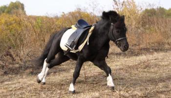 Снаряжение для лошади