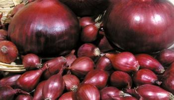 Плоды лука Ред Барон