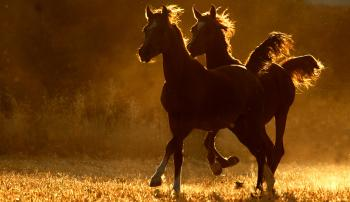 Правильное содержание лошадей