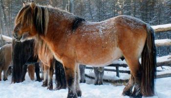 Убой лошадей