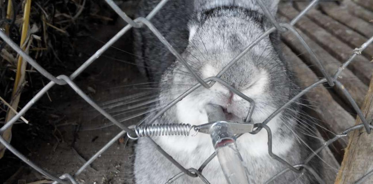 Поилка для кроликов
