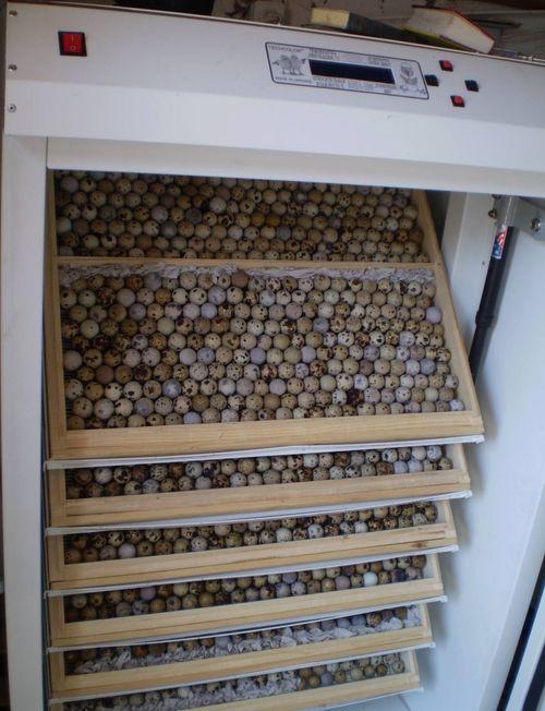 Использование холодильника для инкубатора