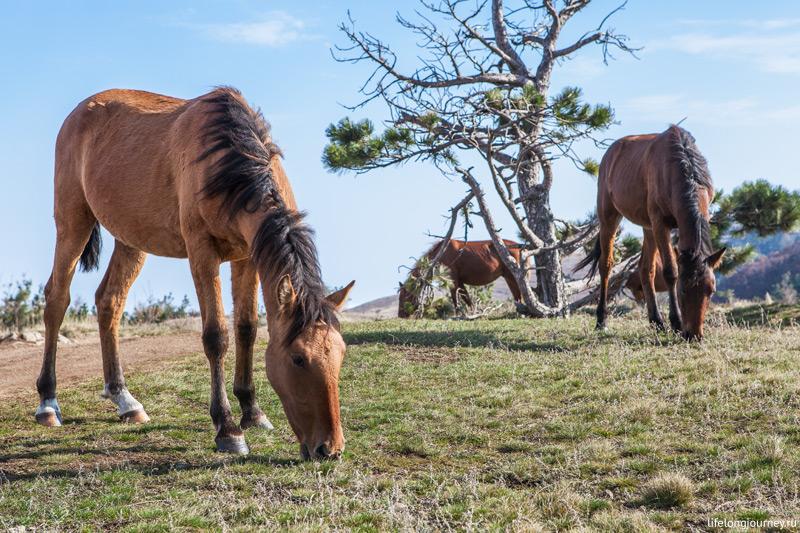Лошадь щиплет траву