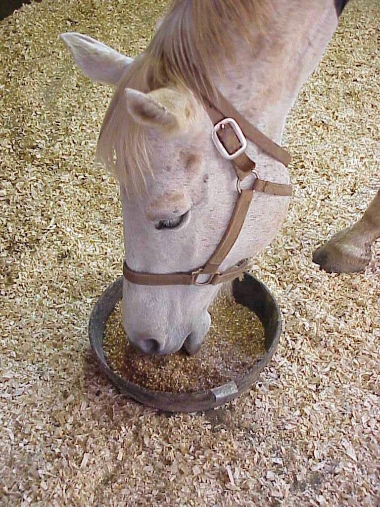 Лошадь ест зерно
