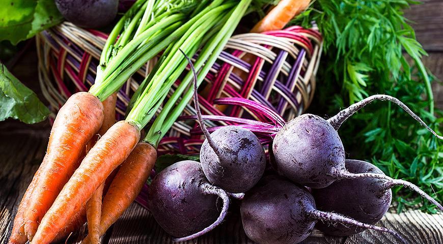Свекла и морковь