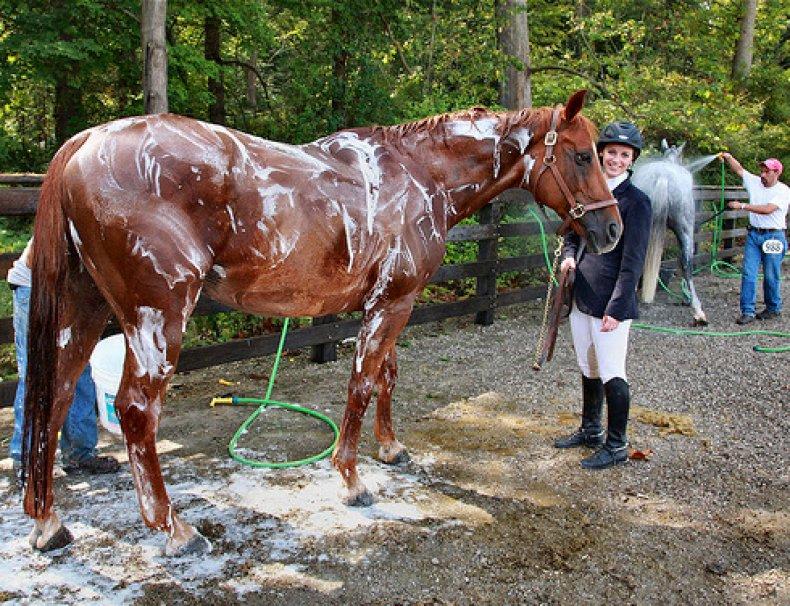 Мытье лошади