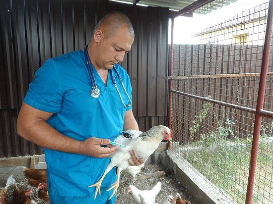 Лечение курицы