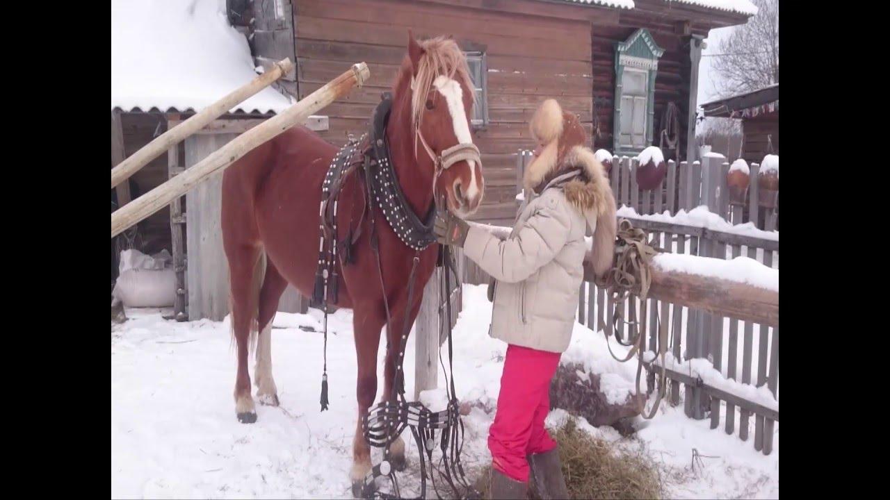 Запряжка лошади